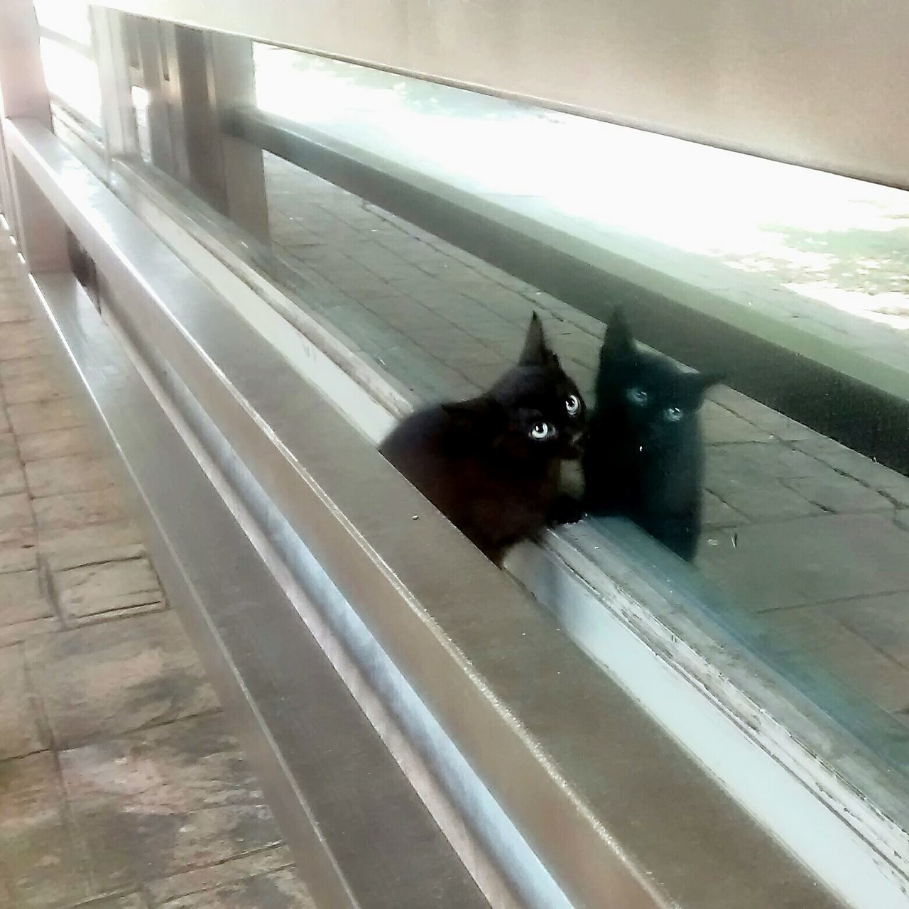 Black Cat, Surprised, Scared, Babycat, Urban Reflections, Cat Eyes, Learn & Shoot: Leading Lines