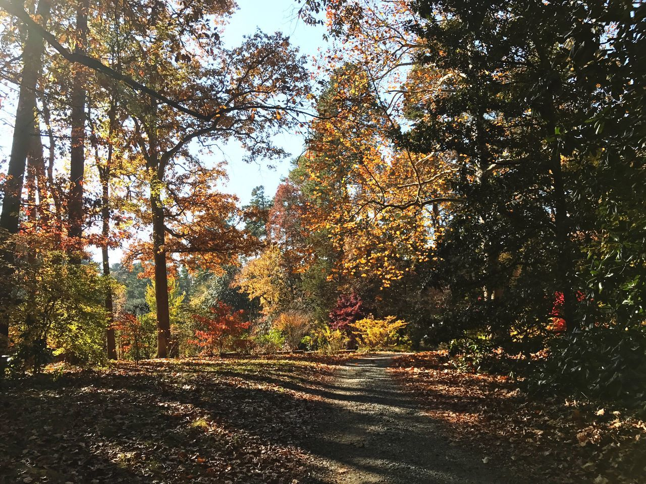Happy Thanksgiving. I'm thankful for this beautiful autumn day. Tree Autumn Change Nature Growth Leaf Beauty In Nature Scenics No People Outdoors Day Tranquility Tranquil Scene Sky