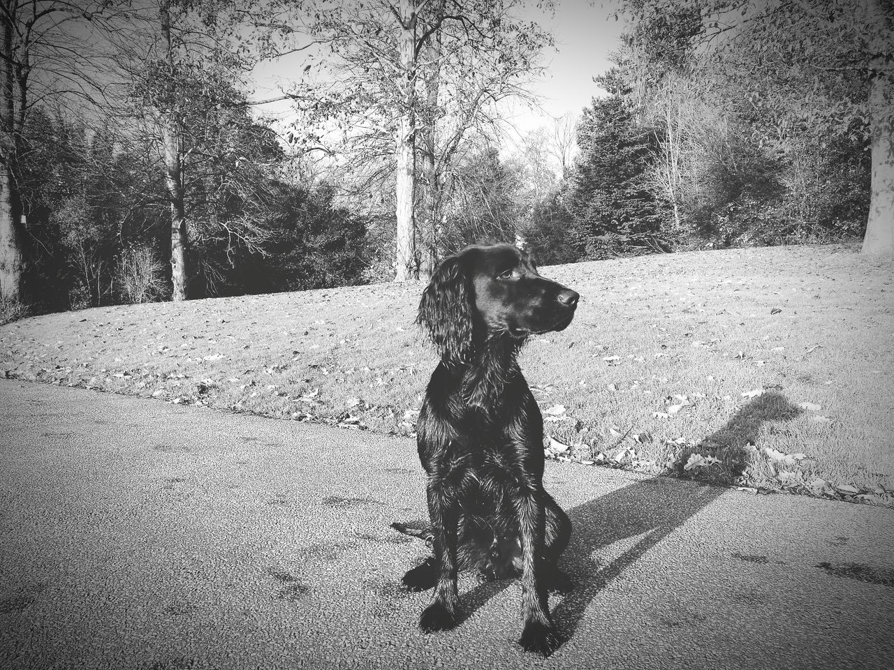 dog, pets, tree, animal themes, one animal, domestic animals, sitting, mammal, day, nature, outdoors, shadow, full length, no people, growth, sky