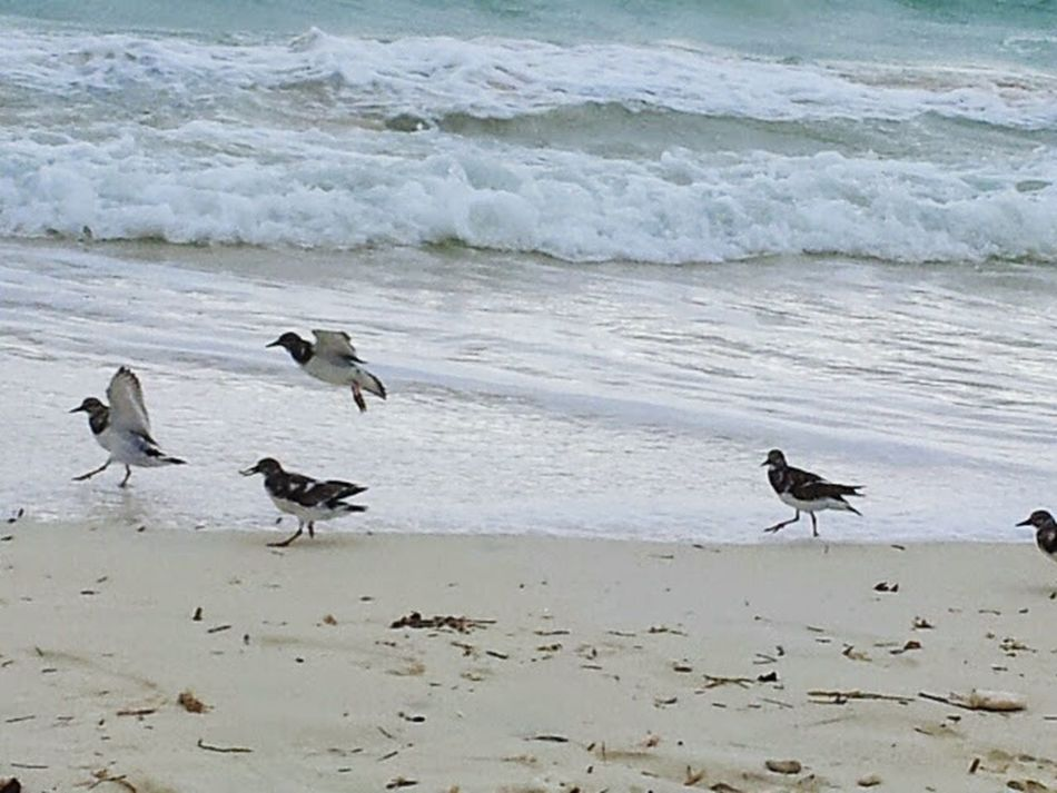 Bird Near Surf Bird And Ocean Bird