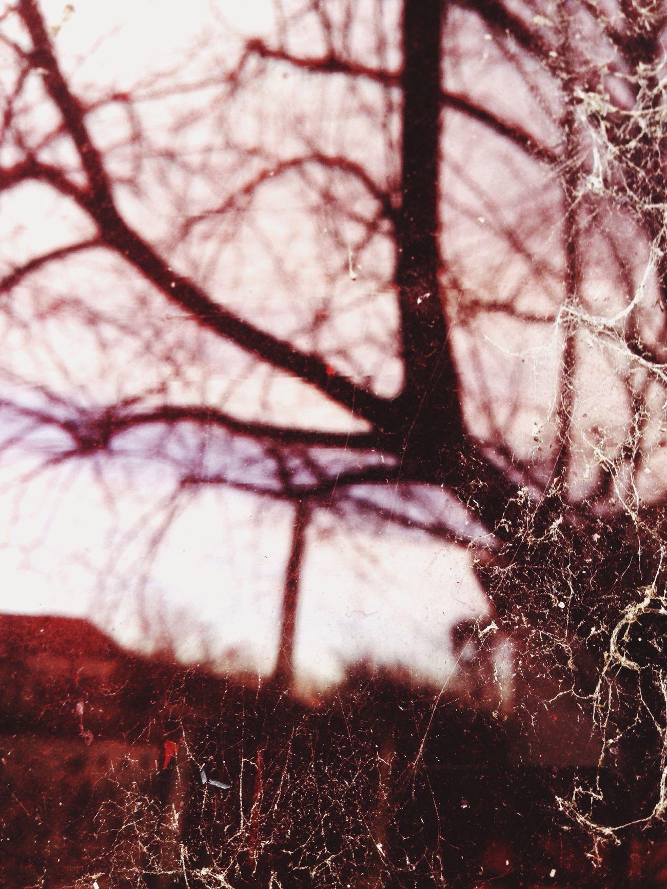 Dirty Window Red Redwindow Tree Home Spiderweb Doyoulikeit? Reflection Detail EyeEn Porto
