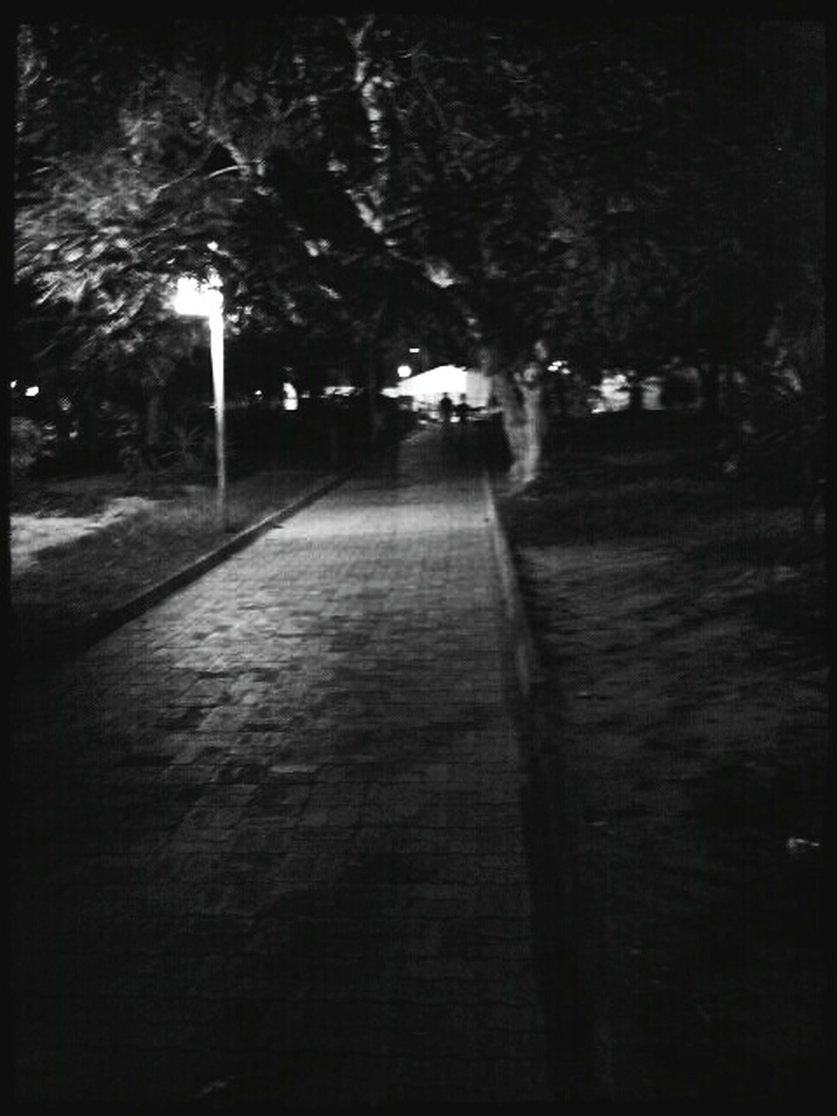 the way forward, tree, transfer print, auto post production filter, diminishing perspective, night, footpath, walkway, empty, narrow, street, growth, vanishing point, sunlight, shadow, pathway, outdoors, road, nature, sidewalk
