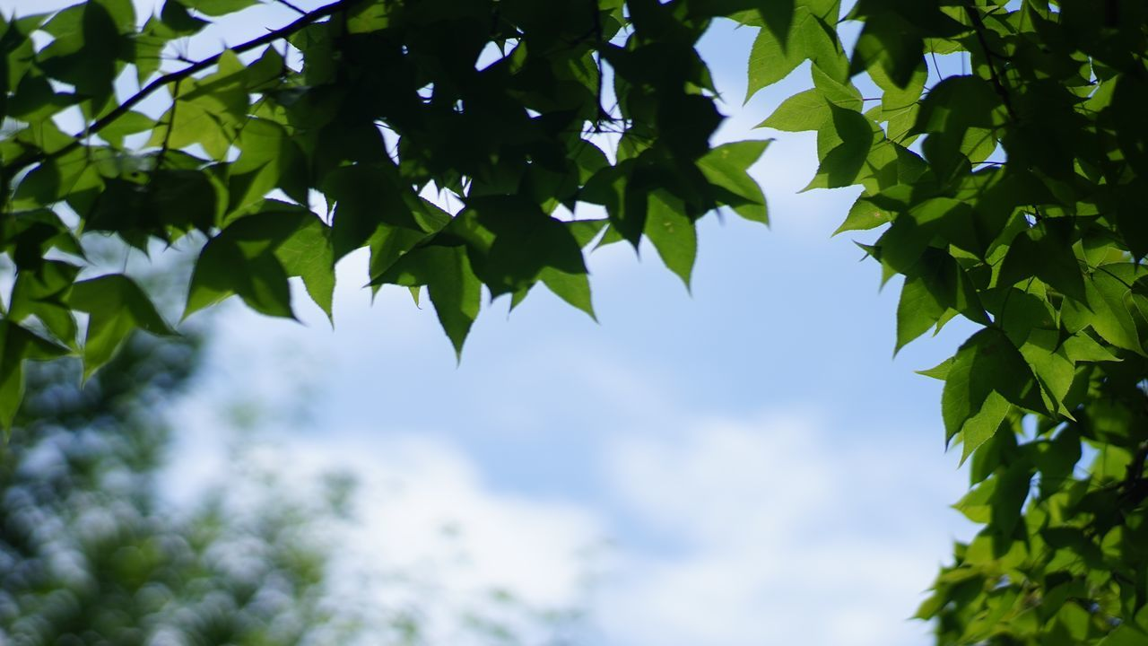 Tree Leaf Growth Low Angle View Branch Nature Green Color Day Beauty In Nature Plant No People Scenics Freshness Close-up Sky