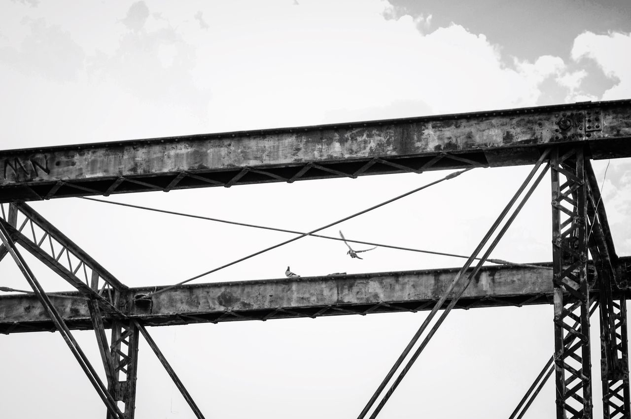 Bridge - Man Made Structure Connection Low Angle View Sky Transportation Day Built Structure Outdoors No People Girder Architecture Close-up Bird Photography Pigeons Flying Bird Bird In Flight Mile High City Denver Colorado  Black And White Monochrome Photography Animal Themes