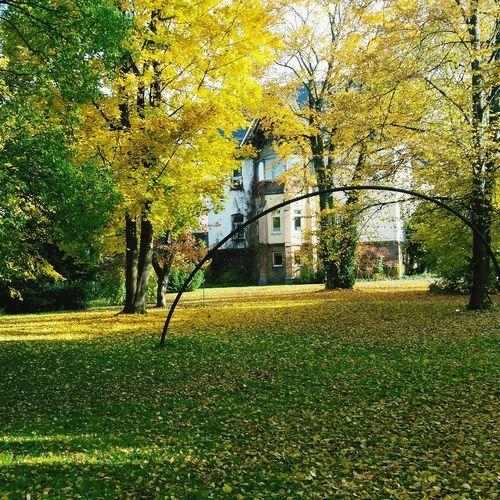 Nature Old Buildings Psychological Hospital Herbst