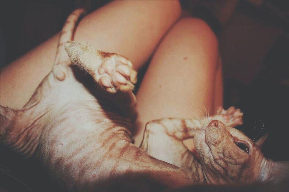 Меня прозвали Пушок🐺 за мою густую гриву и мягкую шерсть😀 One Animal Pampered Pets Close-up селфихуелфи селфидлявсех себяшечка себяшка селфи котоселфи кото_фото Котейка котэ Котик кот Selfi Selfies Selfie ✌ Catsofinstagram Catstagram Cat Lovers Cat Cats 🐱 Zoology