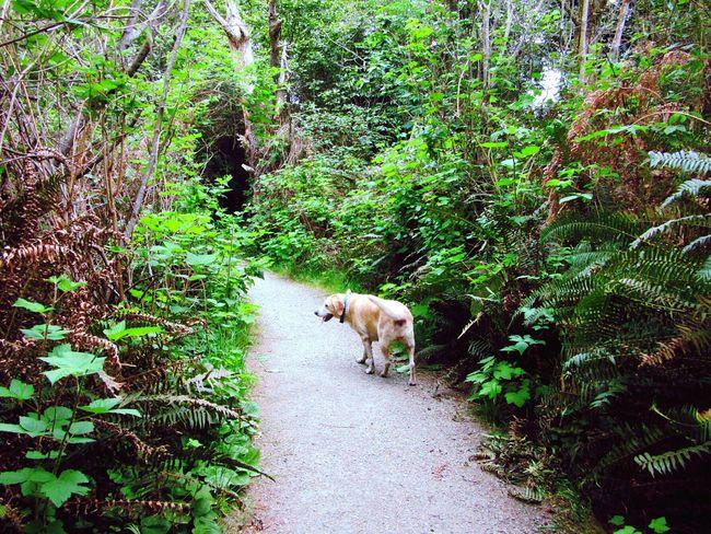 Follow Me On The Trail I Love My Dog Walking The Dog Path Taking A Walk