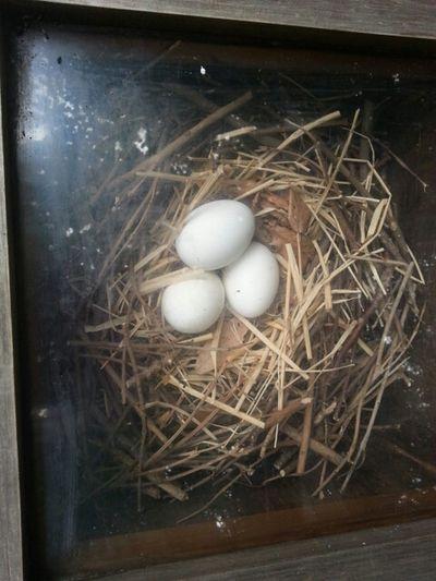 こうの鳥の卵だってさぁー(#^.^)