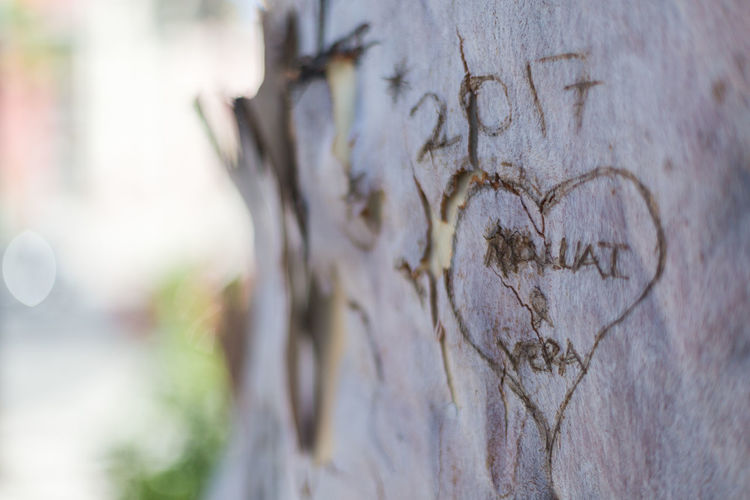 heart carved tree 2017 Barks Of A Tree Barks Peeling Bokeh Bokeh Background Bokeh Love Bokeh Photography Bokehlicious Close-up Cute Day Heart Carved Into Tree Heart Carved Tree Love Love ♥ No People Outdoors Park Park - Man Made Space Shaded Shadows Shallow Depth Of Field Text Textured  Tree