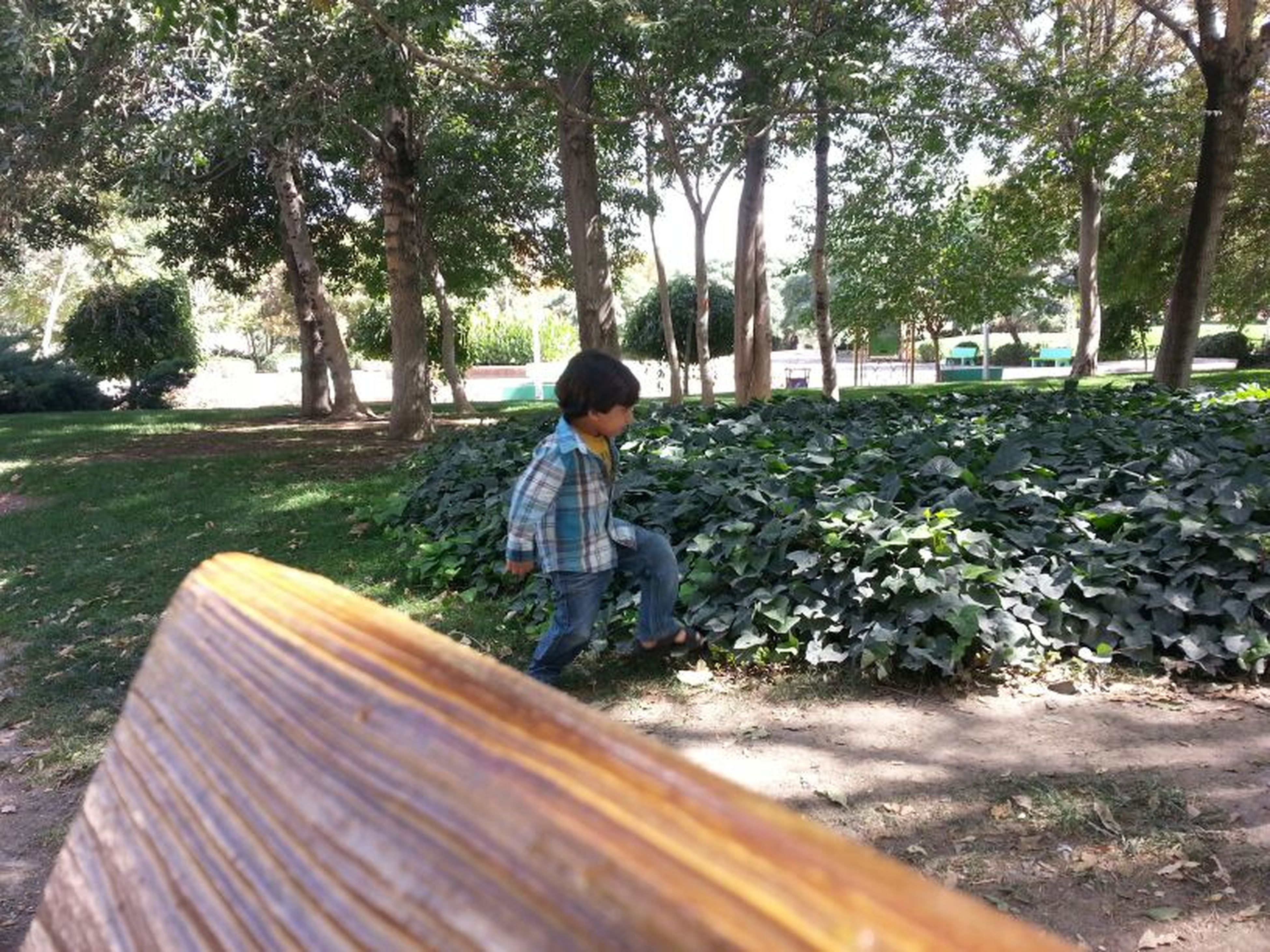 tree, lifestyles, casual clothing, rear view, leisure activity, full length, childhood, person, sitting, park - man made space, nature, relaxation, day, growth, tranquility, elementary age, boys, outdoors