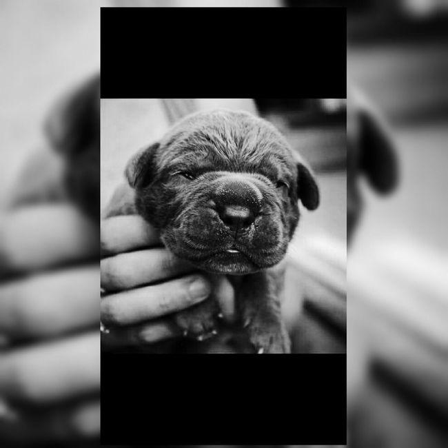 Heden il y à 3 ans.. 🐶😱 Dog Heden Chien