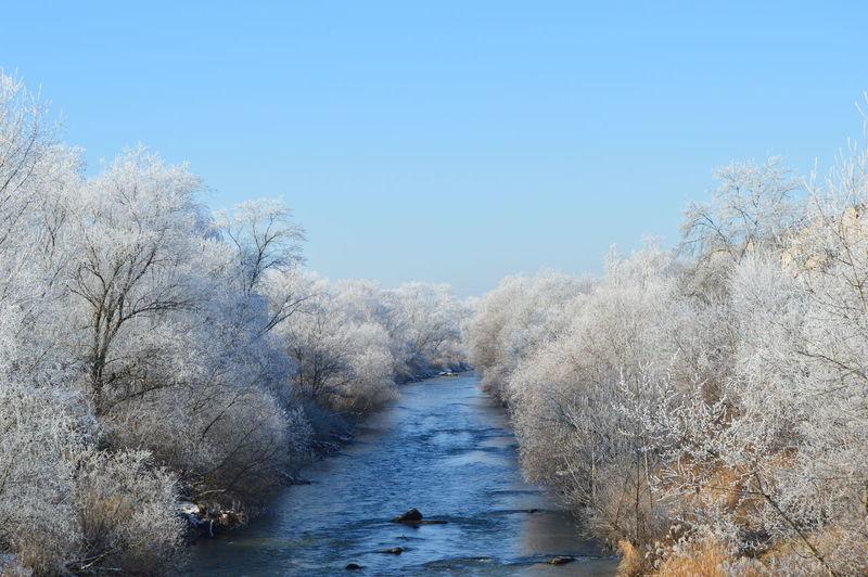 зима Tree Nature Sky река деревья иней Лес небо