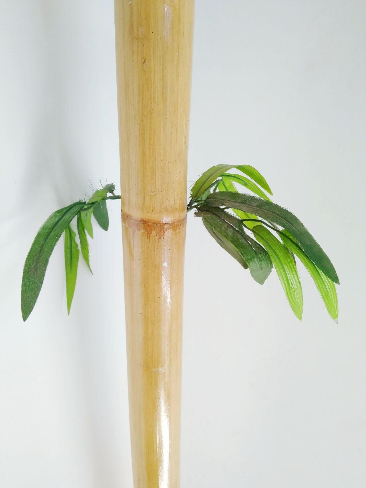 ... Bamboo Bamboo Art Bamboodesign