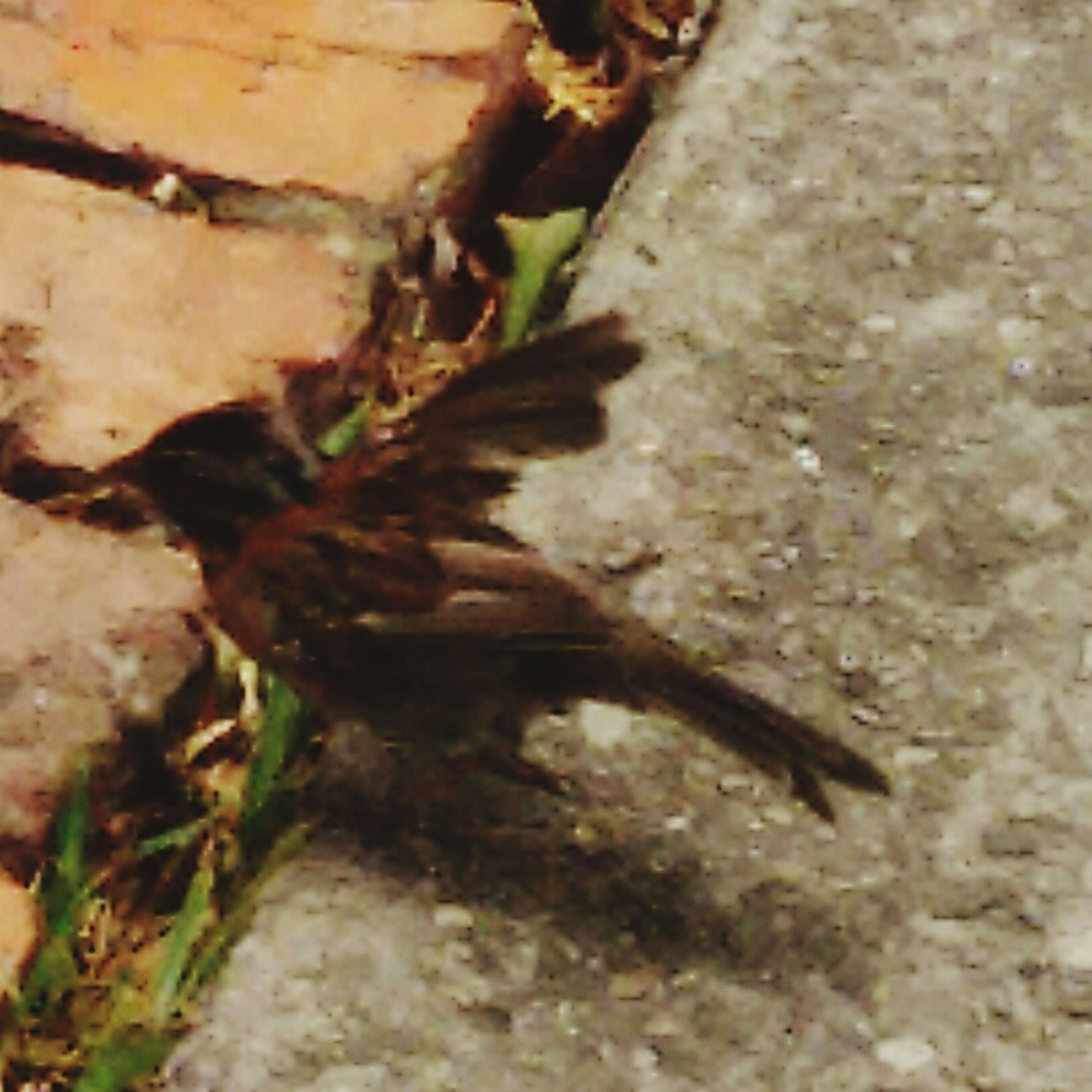 Aves Ave Aves 🐥🐤🐥 Pajaros Pajaro Listoparavolar