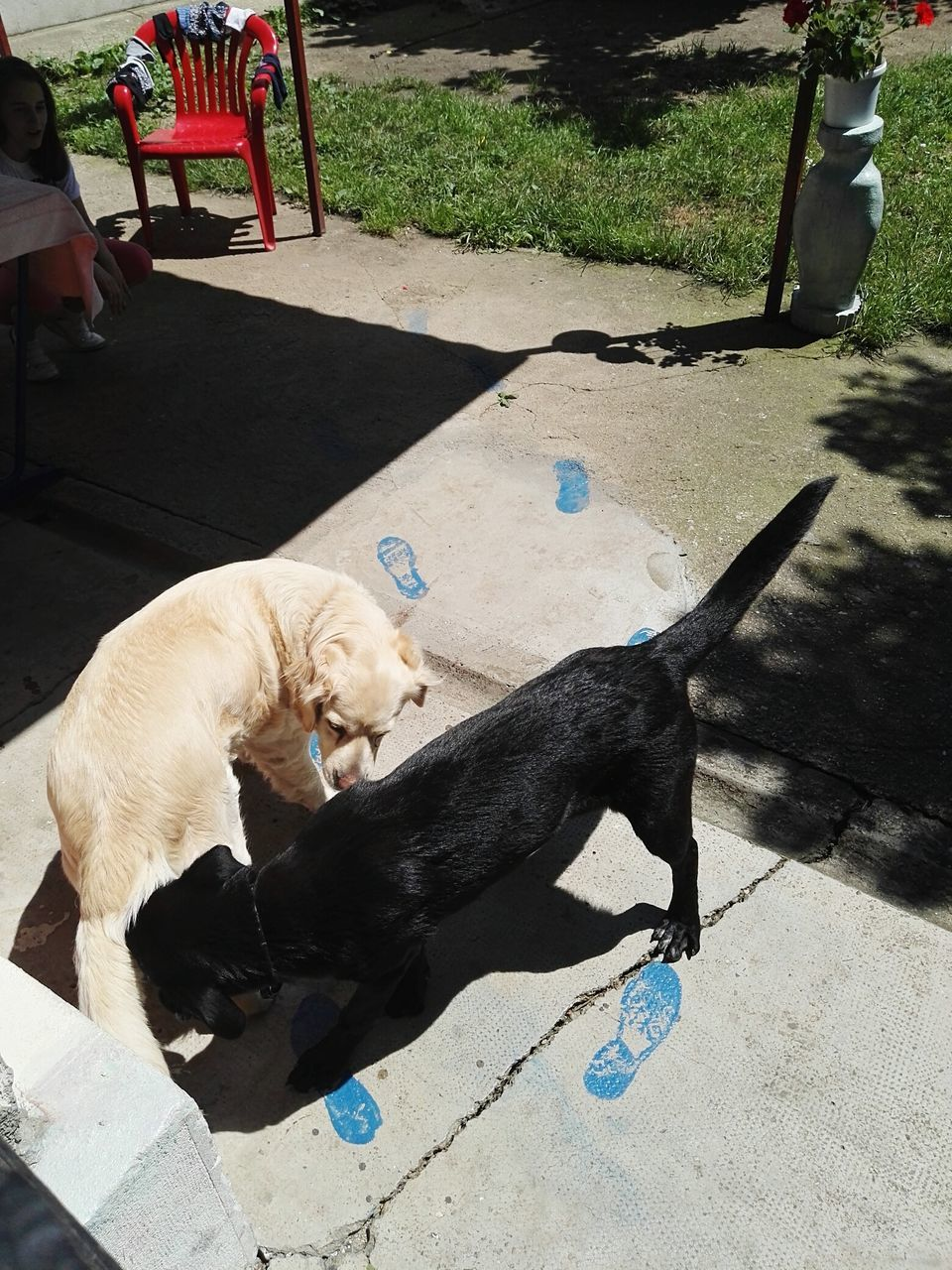 dog, pets, domestic animals, mammal, animal themes, outdoors, day, high angle view, sunlight, shadow, no people, one animal