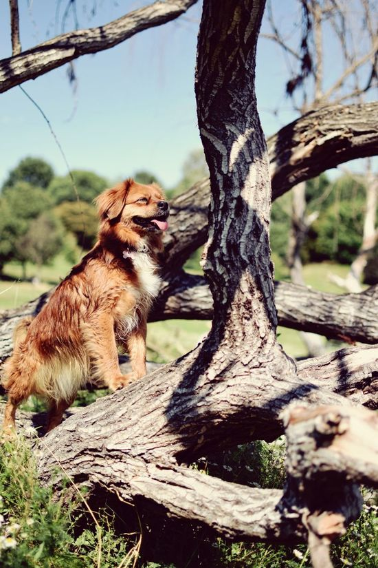 Tree One Animal Tree Trunk Animal Wildlife Animals In The Wild Day Nature Branch No People Mammal Outdoors Close-up Animal Themes Leopard Sky Nature Landscape Travel Destinations Dogslife