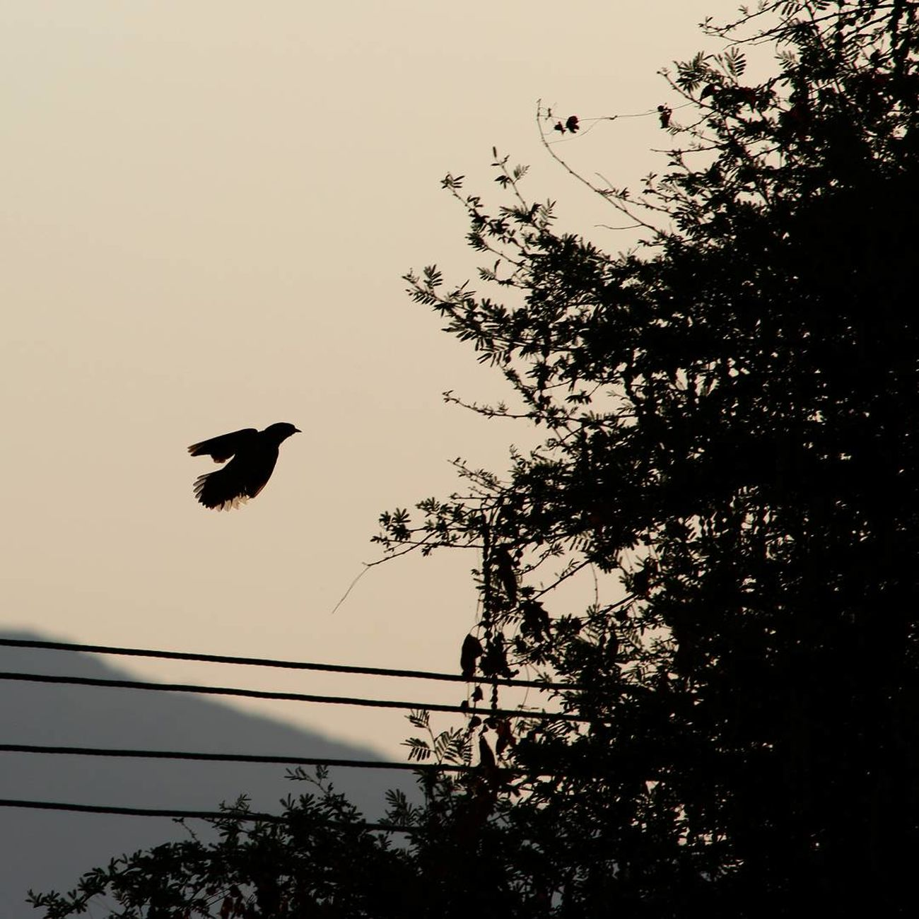 Bird Flying Sunset Silhouette Animals In The Wild Animal WildlifeTree Window Animal Themes No People Nature One Animal Sky Low Angle View Outdoors Hovering Beauty In Nature Moon Day Transportation Freshness Journey Cloud - Sky Nature