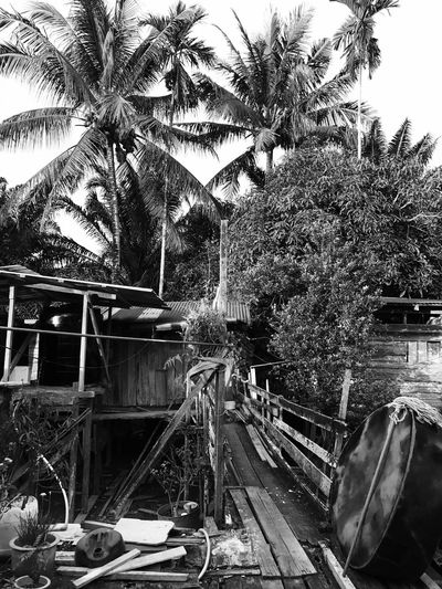 Longhouse rickety wooden back porch. Tree Palm Tree Day No People Outdoors Nature Sky