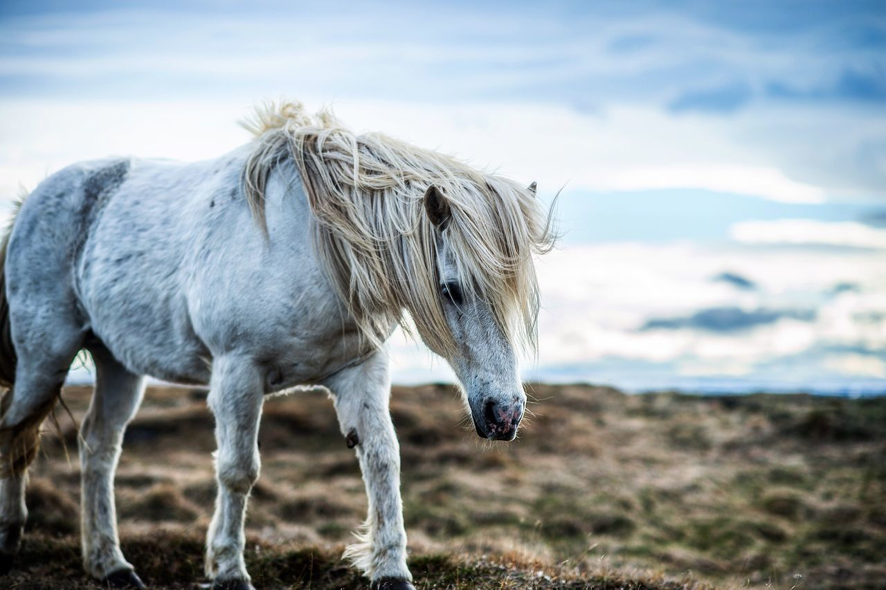 Beautiful stock photos of einhorn,  Animal Themes,  Blue,  Cloud - Sky,  Cloudy