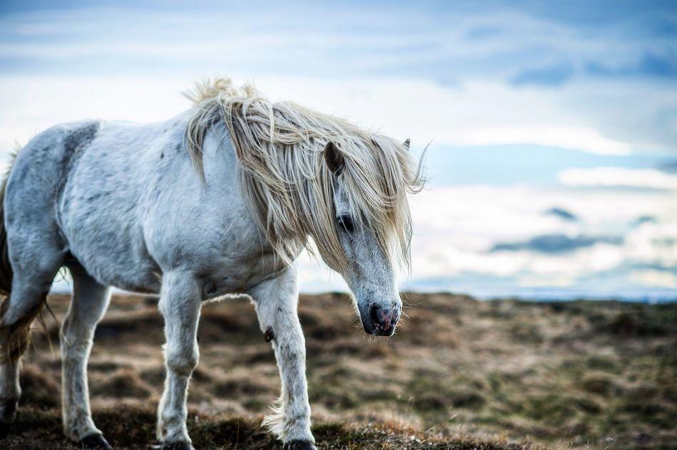 Beautiful stock photos of einhorn,  Animal Themes,  Blue,  Cloud - Sky,  Cloudy