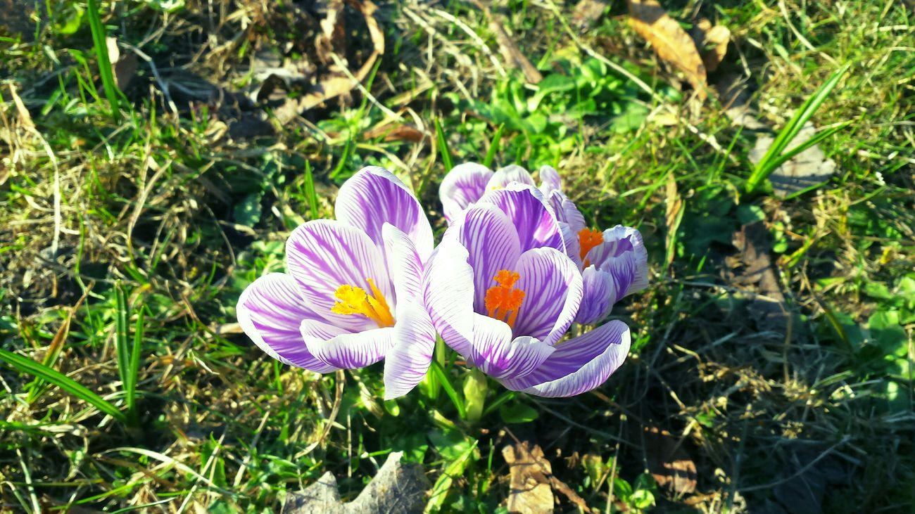 Soamazing Taking Photos Natural Beauty Hello World ✌ Poland Warsaw Flowers, Nature And Beauty