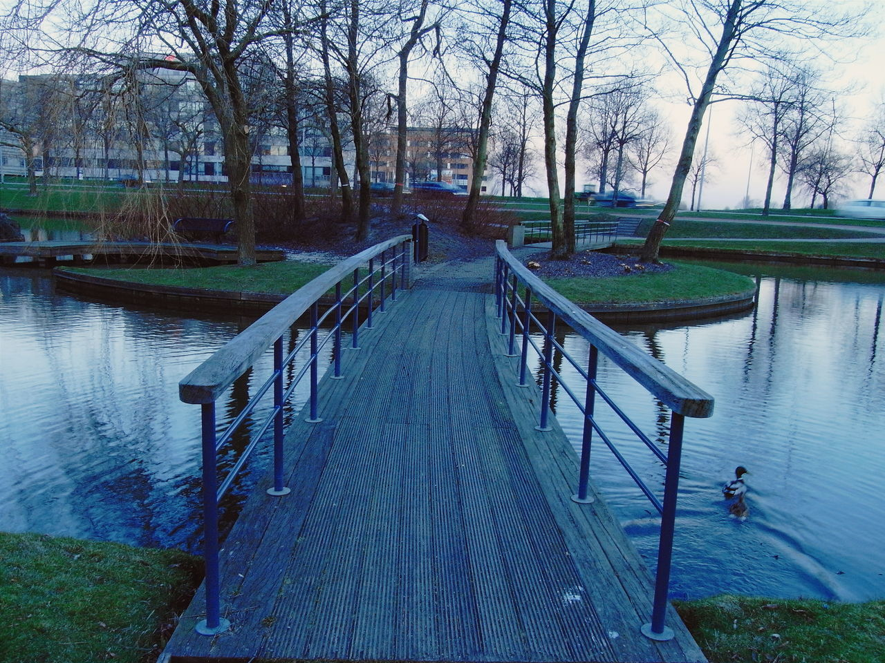 Photo taken near Radisson Blu Hotel in Schiphol-rijk Amsterdam Your Amsterdam Netherlands Europe Wood Blue Travel Photography Original Experiences Water The Way Forward Footbridge Tranquility Diminishing Perspective Bare Tree Tranquil Scene Outdoors Rippled Beauty In Nature Walkway Idyllic Vanishing Point Duck Horizontal Ricoh