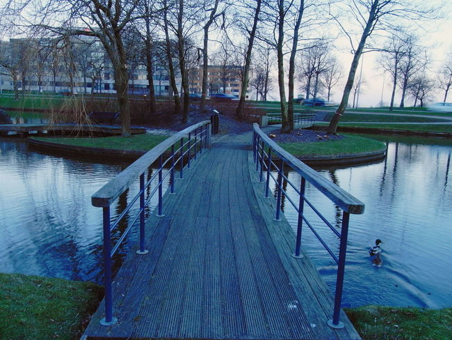 Photo taken near Radisson Blu Hotel in Schiphol-rijk Amsterdam Your Amsterdam Netherlands Europe Wood Blue Travel Photography Original Experiences Water The Way Forward Footbridge Tranquility Diminishing Perspective Bare Tree Tranquil Scene Outdoors Rippled Beauty In Nature Scenics Walkway Idyllic Vanishing Point Duck Ricoh