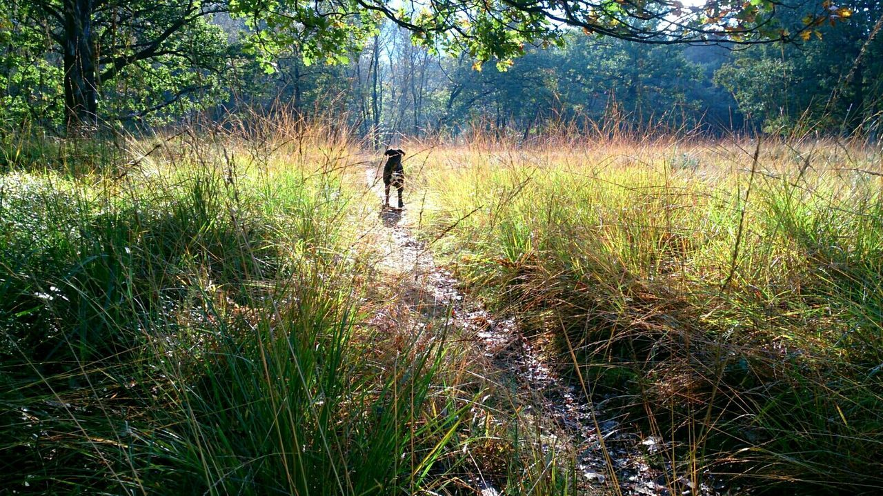 Dog In Nature Autumn Landscape With Dog Boxer In Forest Dog In Woods Nature Landscape Sun Brightness Growth Nature Beauty In Nature Outdoors Landscape Horizontal Nature