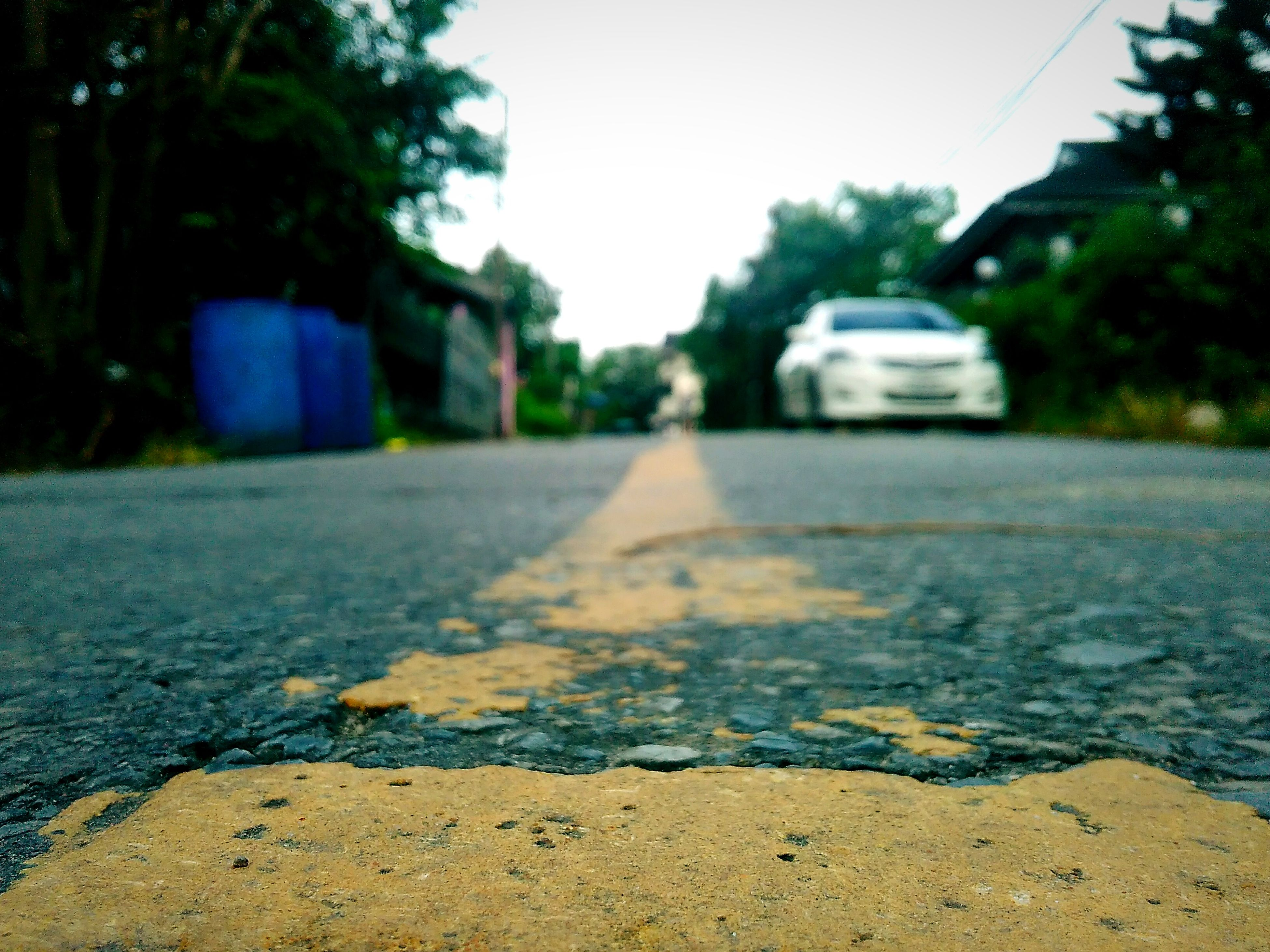road, street, the way forward, transportation, tree, outdoors, surface level, no people, asphalt, day, close-up, nature