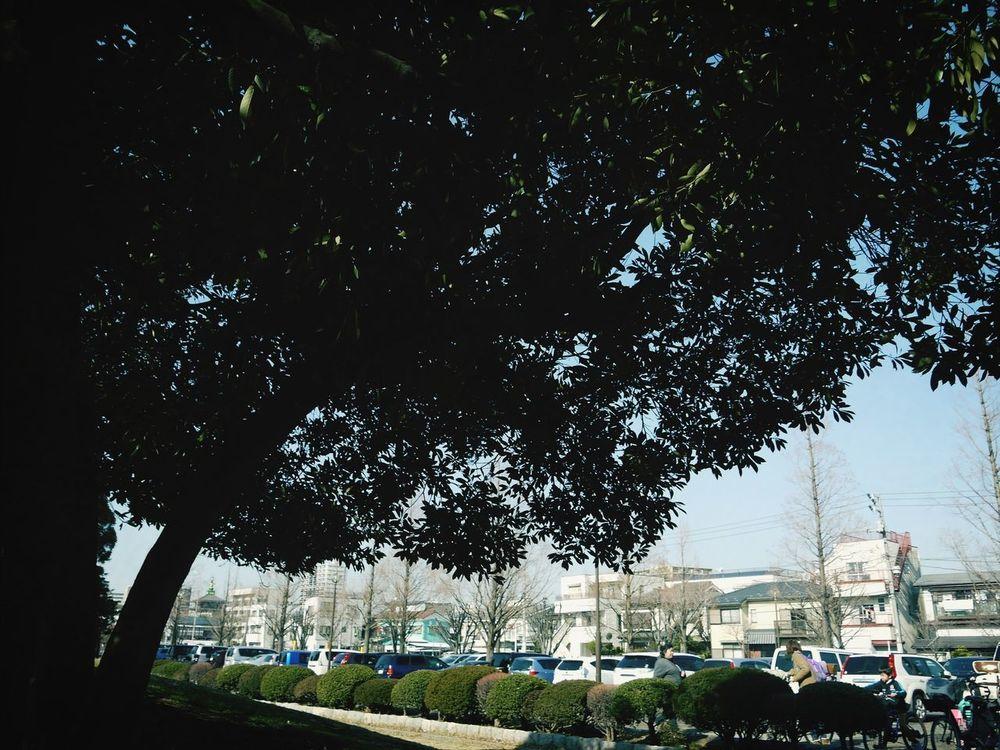 Trees Akiphoto Lumix Kawasakicity ^_^