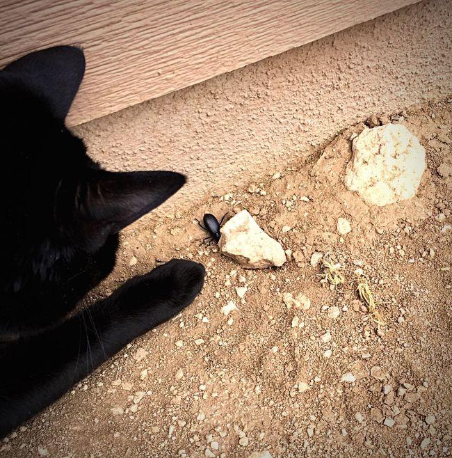 """The Hunter"" Stalking the stink bug at his own risk. Cat Cats Cat♡ Cat Lovers Catsofinstagram Catoftheday Cats Of EyeEm BLackCat Blackcatlove Blackcats Stinkbug Hunt"