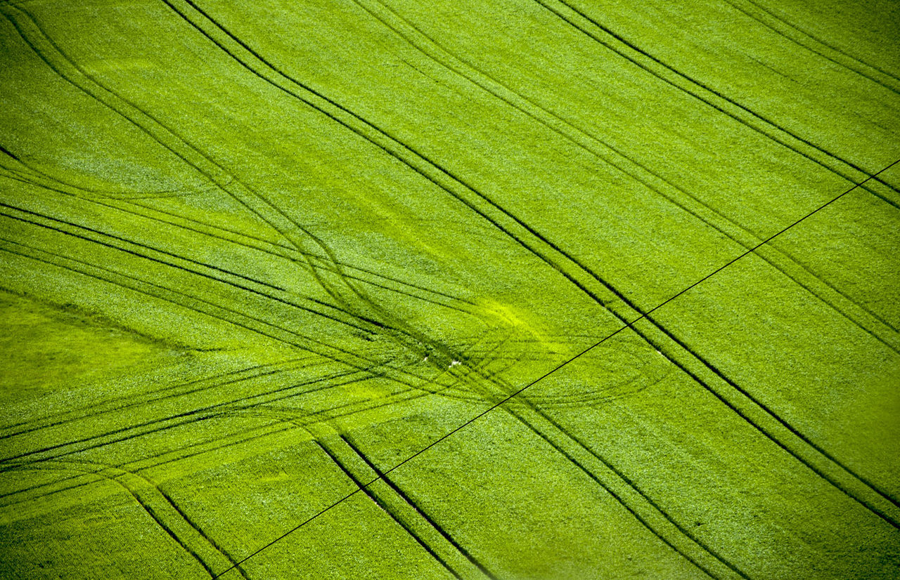 Green fields Agriculture Background Backgrounds Beauty In Nature Close-up Crops Day Freshness Full Frame Grass Grass Green Color Green Field Green Fields Growth Leaf Nature No People Outdoors Paths Striped The Great Outdoors - 2017 EyeEm Awards