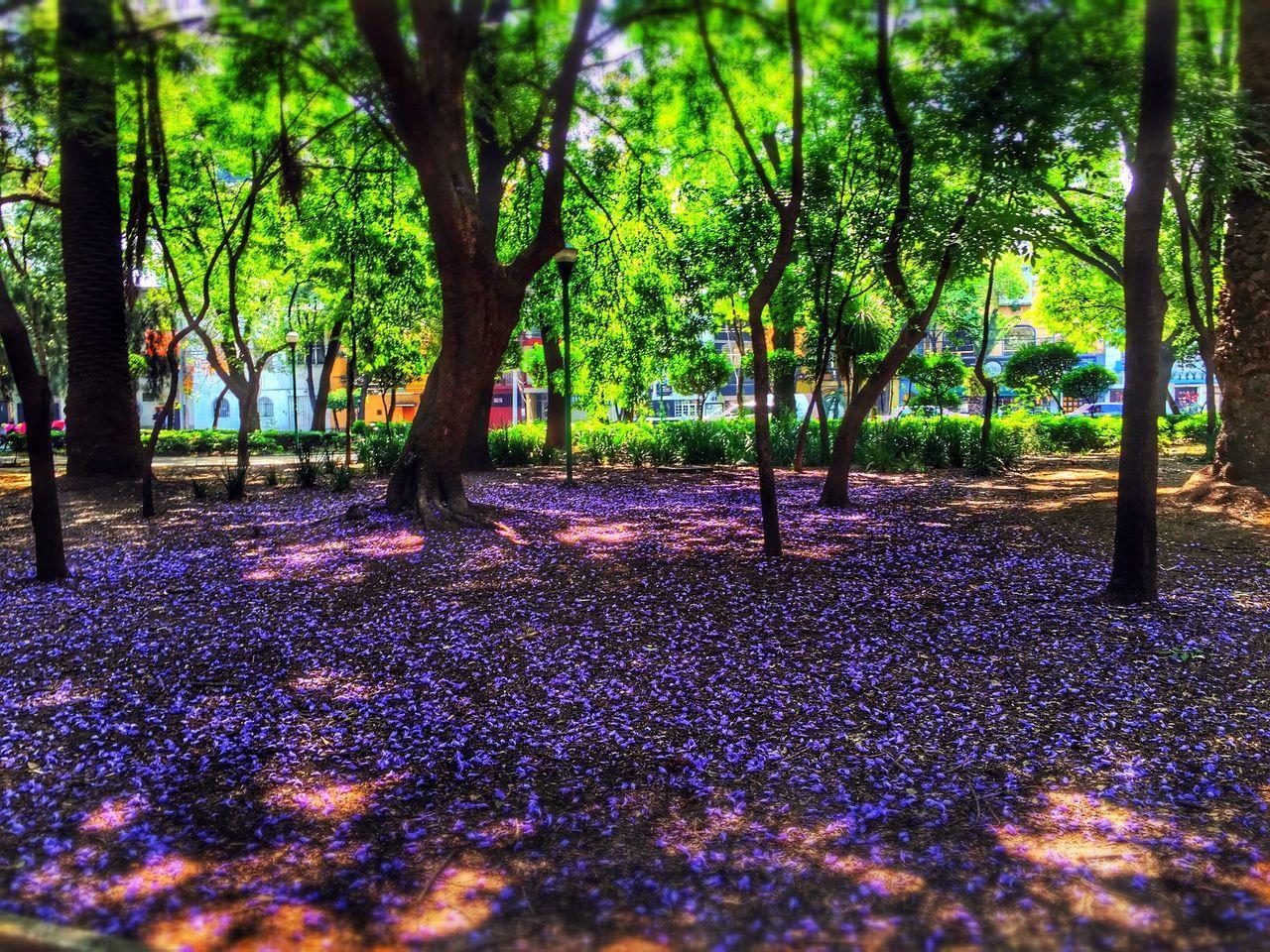 Falling Flowers In Park