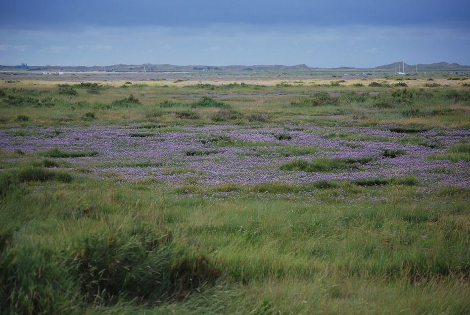 Landscape Nature Field Grass Scenics Growth Tranquil Scene Beauty In Nature No People Sky Outdoors Day Tranquility Sea Lavender
