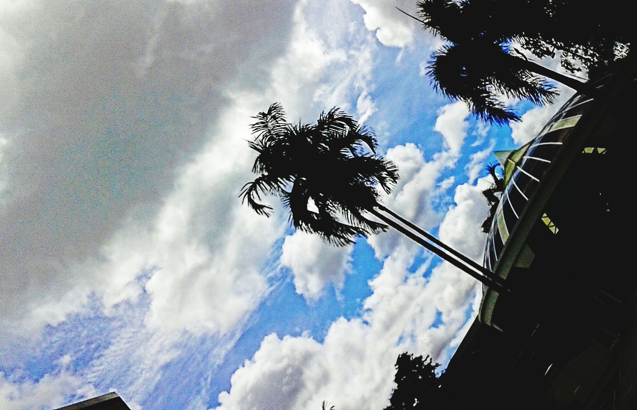 sky, low angle view, cloud - sky, tree, cloudy, cloud, nature, silhouette, weather, tranquility, beauty in nature, day, overcast, branch, no people, outdoors, scenics, growth, tranquil scene, built structure