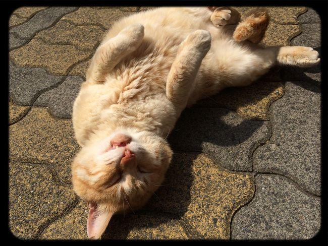 Cat Taking Photos Relaxing