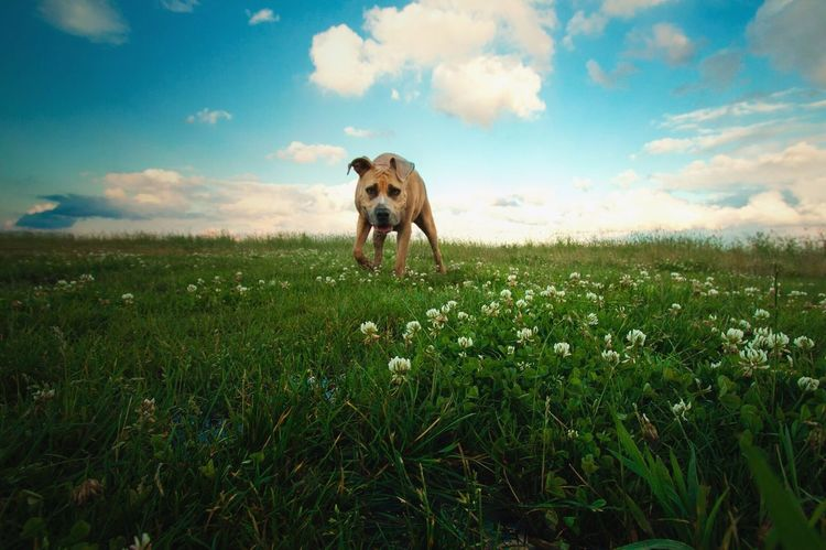 Check This Out Taking Photos Photography Nature Pets Dog❤ Sky Canon 70d Canonphotography Wide Angle