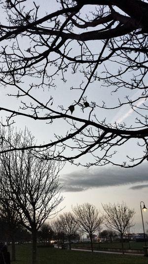 Malinconia... Hello World TreePorn Loneliness Nature Harmony