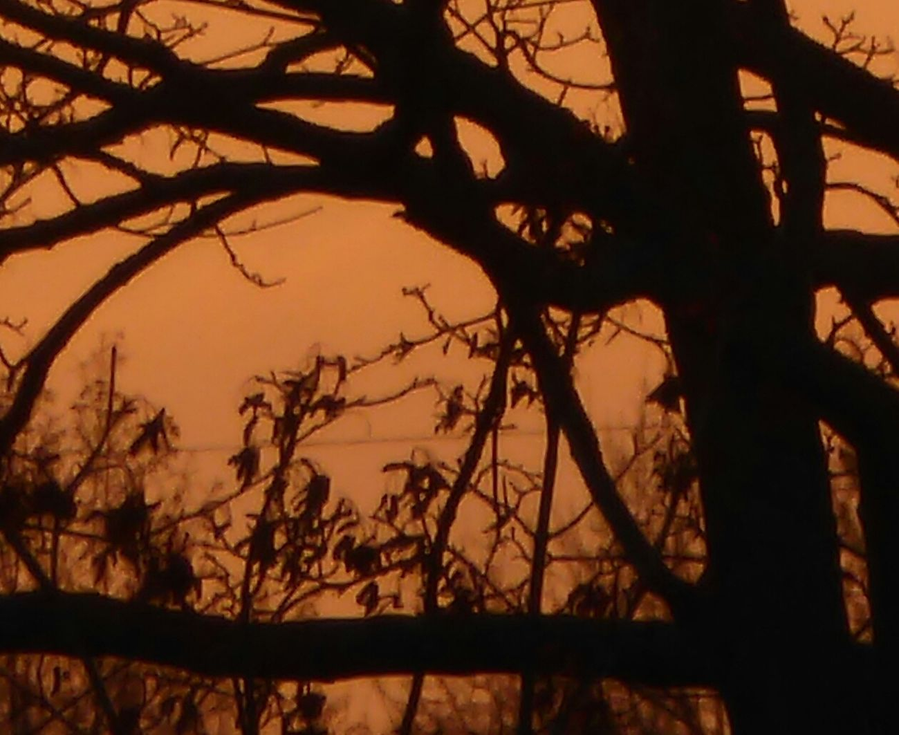 Sundown Through A Tree Silhouette Beauty In Nature Orange Color A Sight That Warms My Heart At Frosty Temperatures Beauty In Nature Love That View Tranquility Tranquil Scene Cold Temperature For My Friends 😍😘🎁 Silhouette Silhouette Photography View From My Window😍