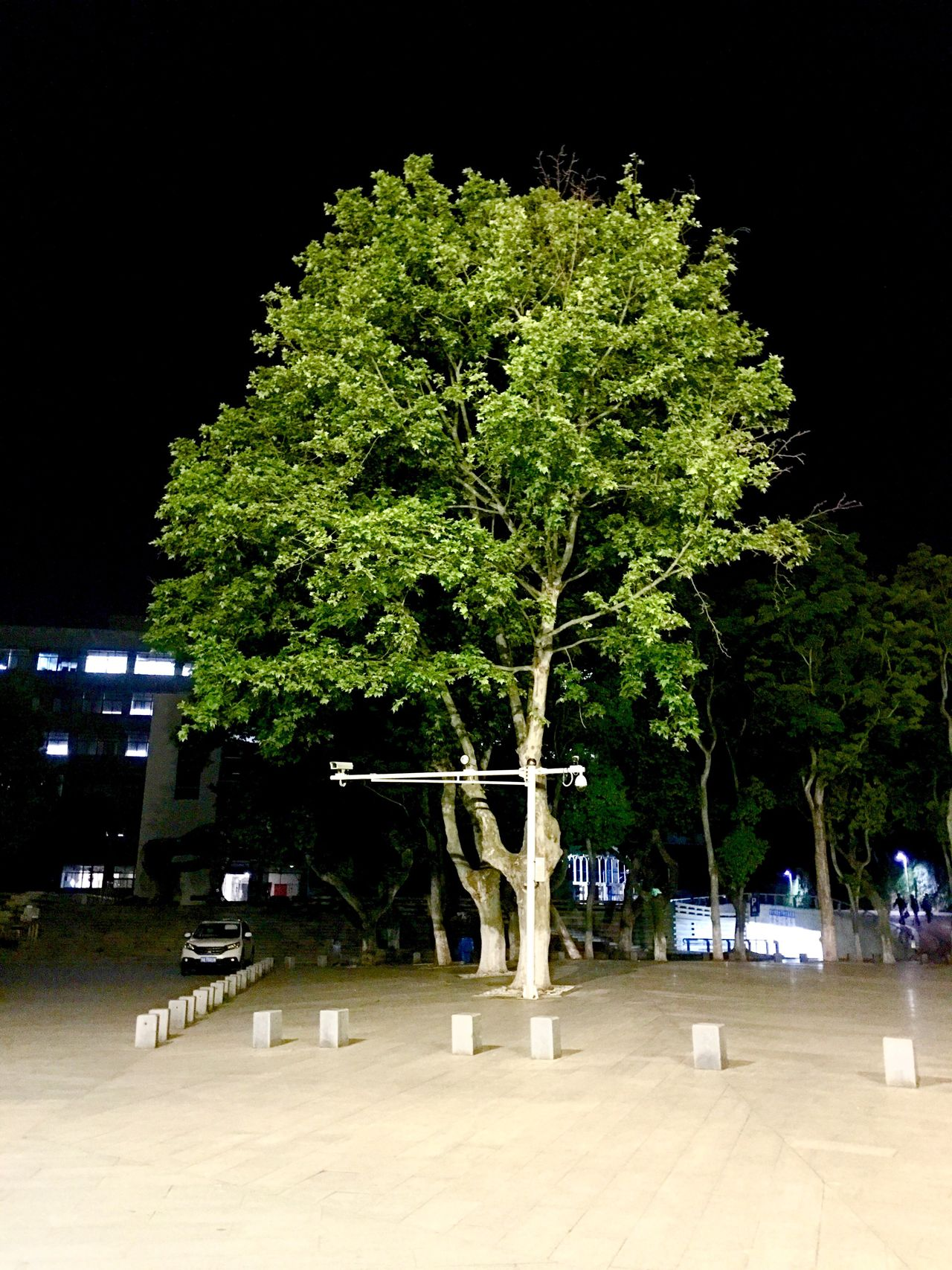 Tree Night School
