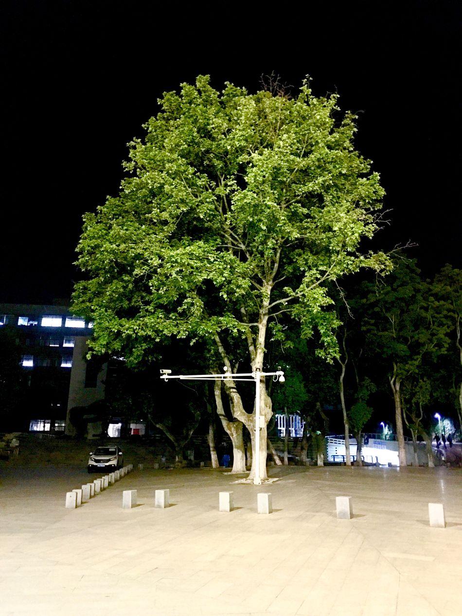 Tree Night School