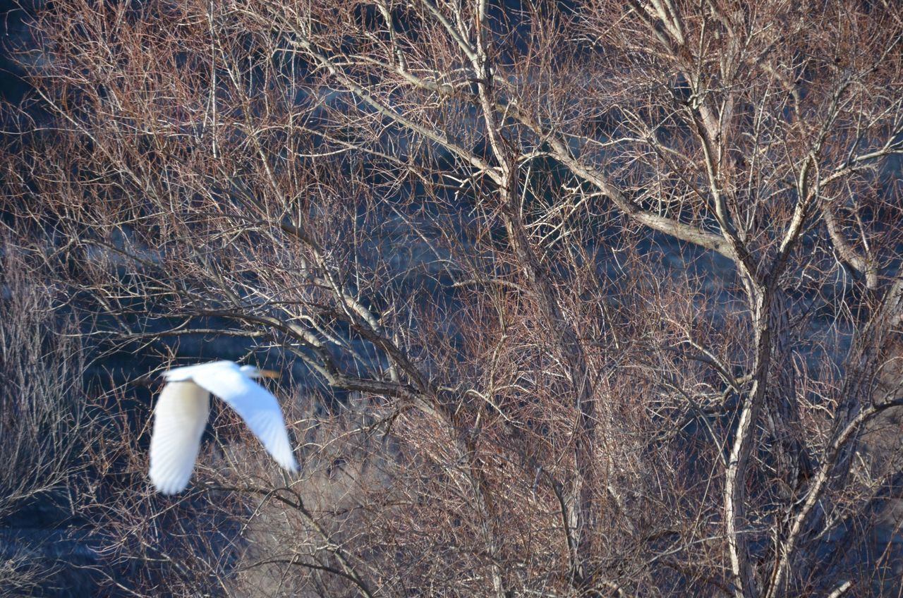 Bird Flying Towards Bare Trees In Forest