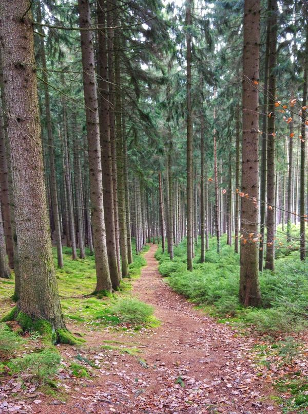 walk in German woodland Footpath Beauty In Nature Day Forest Forest Photography Friedrichroda Grass Growth Landscape Nature No People Outdoors Scenics Sky Thüringer Wald Tranquil Scene Tranquility Tree Tree Trunk WoodLand Woodland Walk Woodlands