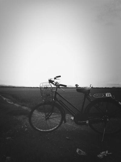 Relaxing Enjoying Life Evening My Bicycle