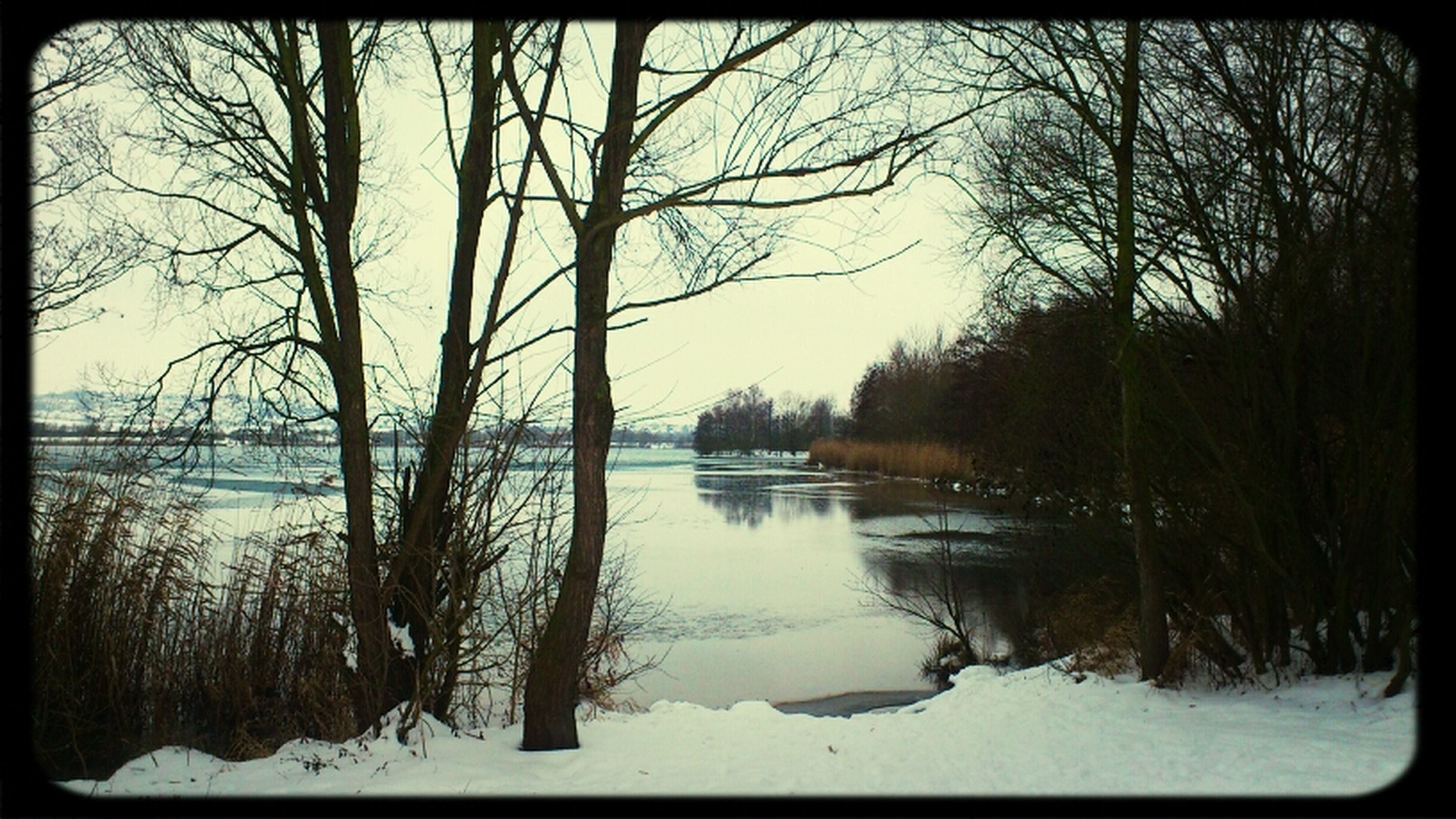 snow, winter, tree, cold temperature, transfer print, bare tree, tranquility, water, tranquil scene, lake, branch, scenics, beauty in nature, nature, auto post production filter, season, reflection, tree trunk, weather, sky
