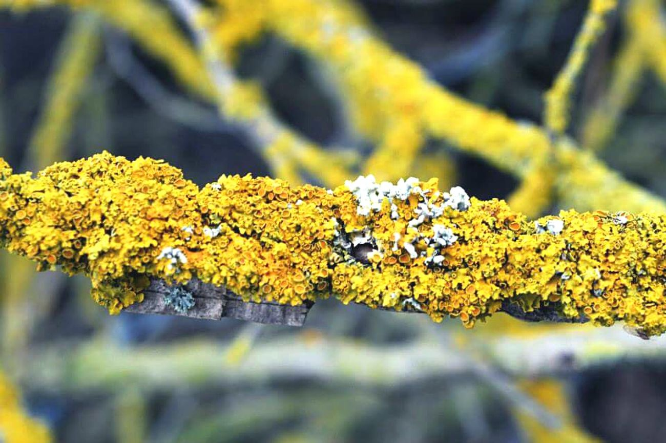 Natures pop of colour Yellow Lychen Nature Spring