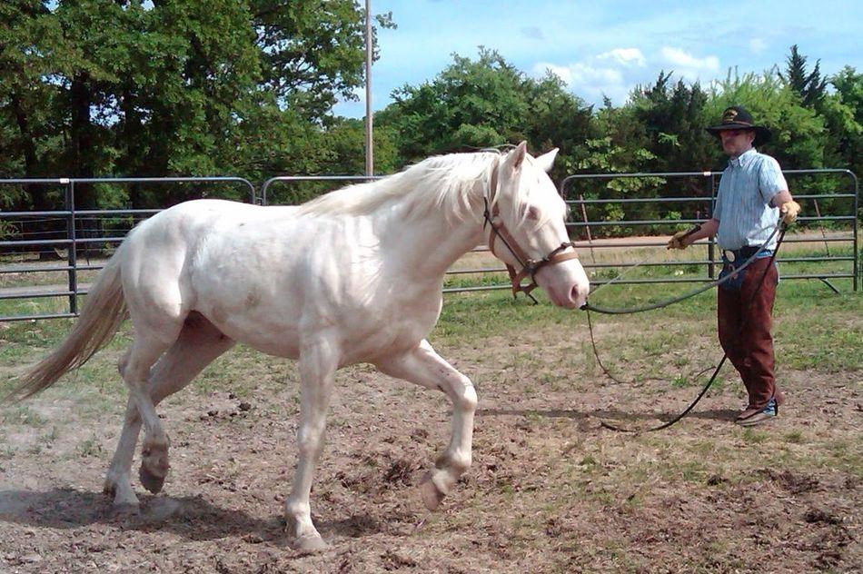 Beautiful stock photos of cowboy, Animal, Cantering, Cowboy, Domestic