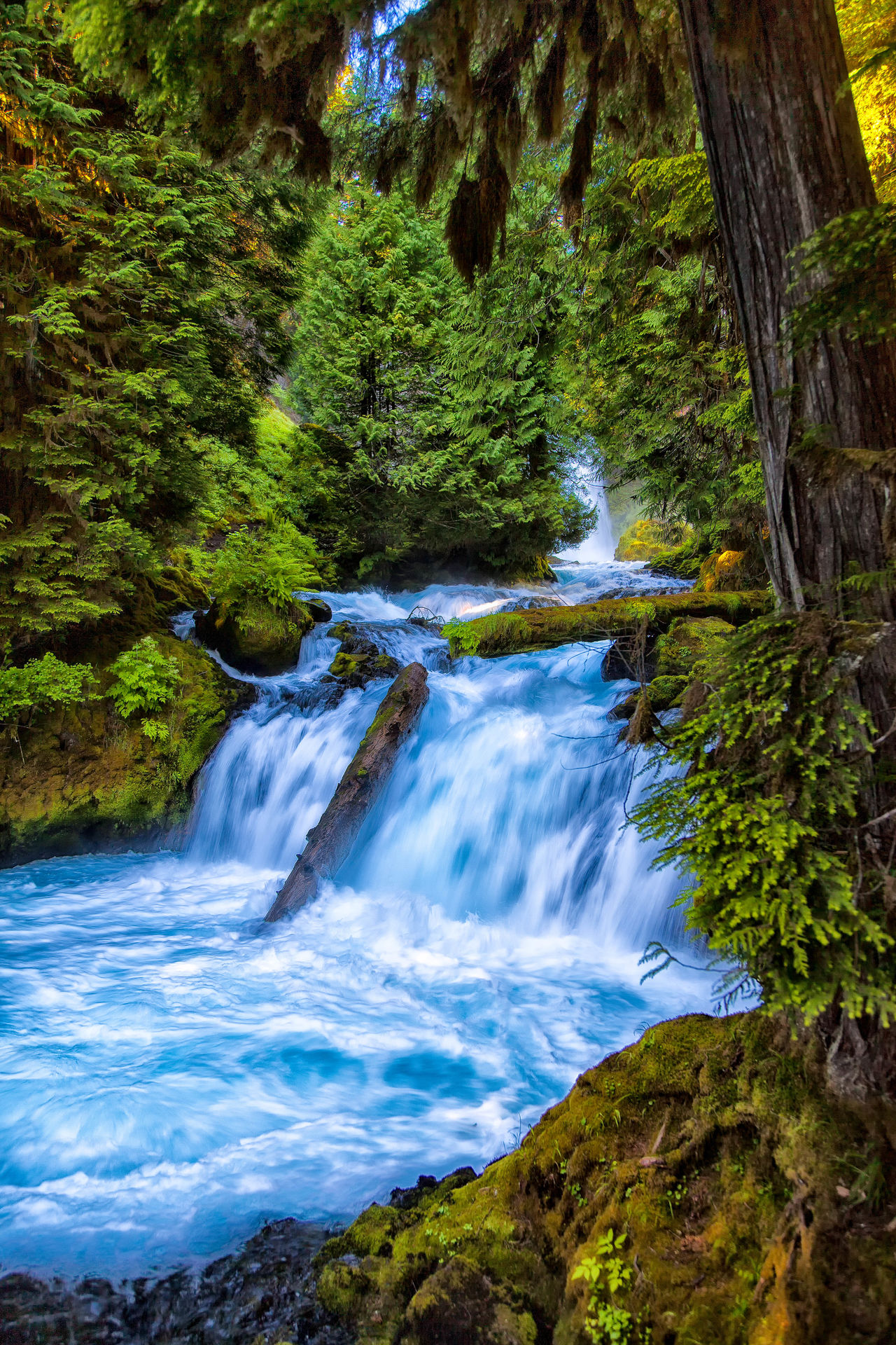 Beauty Beauty In Nature Day Environmental Conservation Flowing Water Forest Landscape Motion Nature Nature Reserve No People Outdoors River Scenics Social Issues Stream - Flowing Water Travel Destinations Tree Vacations Water Waterfall