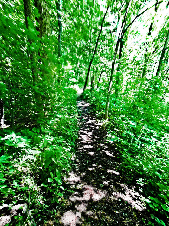 Forest Growth Lansing Michigan Narrow Path Relaxing Moments Valhalla