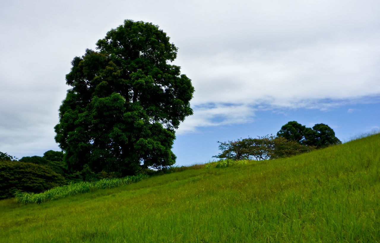 Green Grass Hawaii Hillside Landscape Outdoors Slanted Trees Tropical